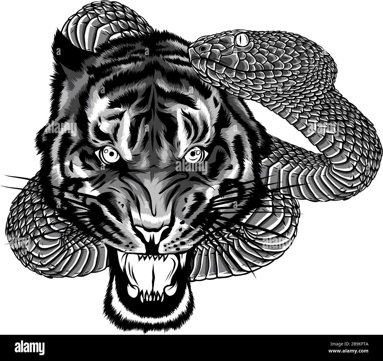 Tiger Tattoo High Resolution Stock Photography And Images Alamy Tiger tattoos have become quite popular due to different astonishing tiger tattoo designs, each featuring fearless tigers such as the bengal tiger or the white tiger. https www alamy com snake and tiger fighting tattoo illustration design image350168794 html