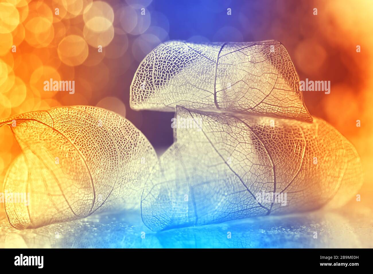 Very beautiful bright colorful background, transparent skeleton leaf backdrop bokeh. Leaves on a luxurious multi-colored background. Selective soft fo Stock Photo