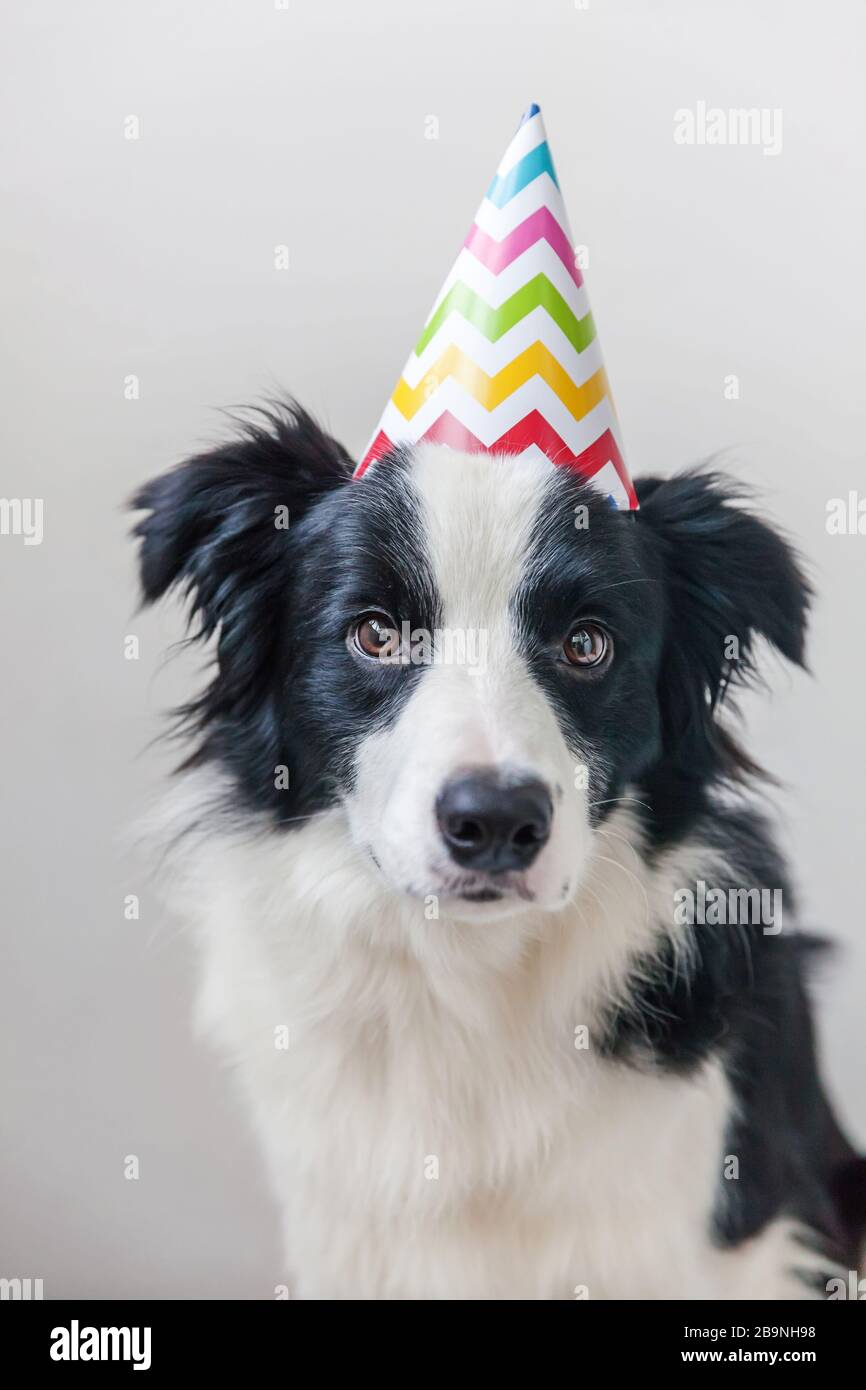 8 ~ Birthday Party Supplies Favors Animals THE SECRET LIFE OF PETS CONE HATS