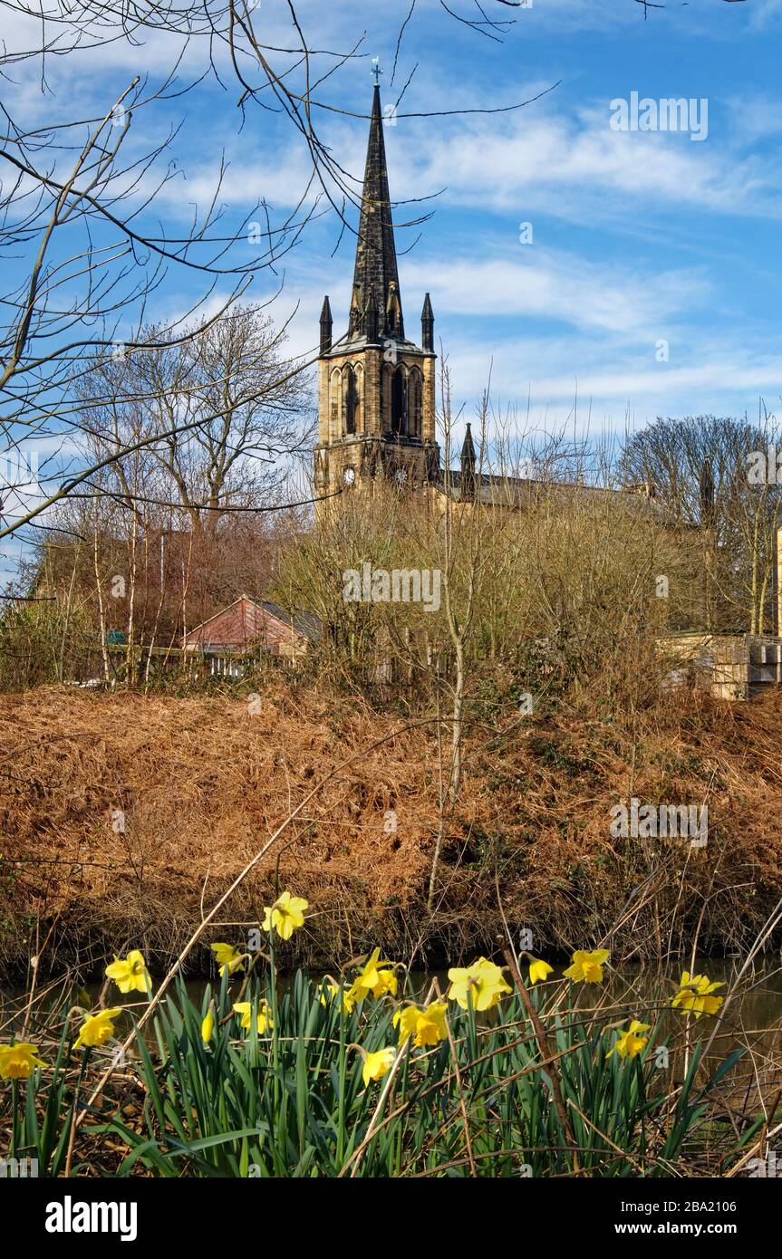 UK,South Yorkshire,Elsecar,Holy Trinity Parish Church and Daffodils next to Elsecar Canal Stock Photo