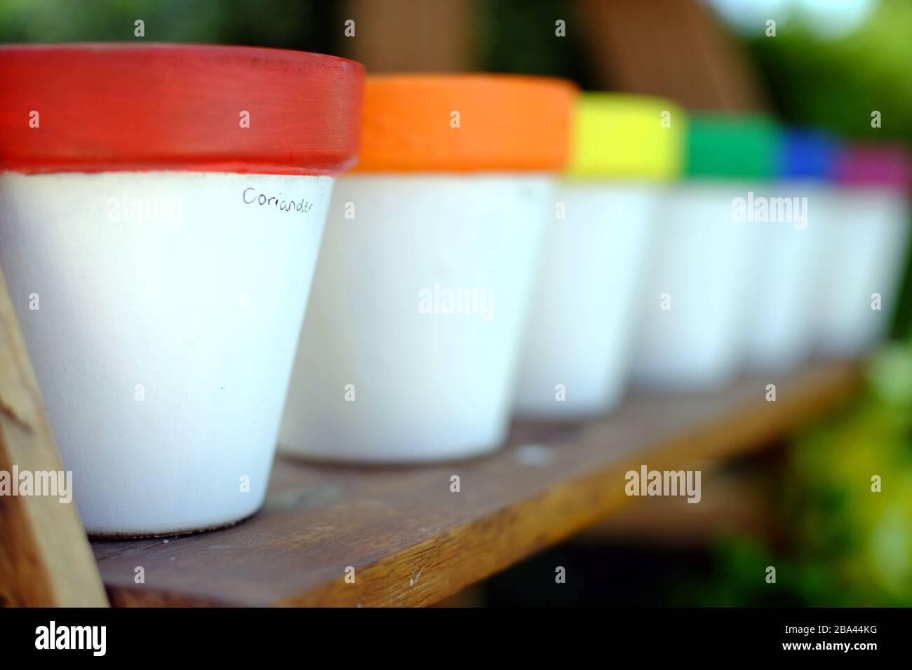 Rainbow coloured home made herb pots Stock Photo