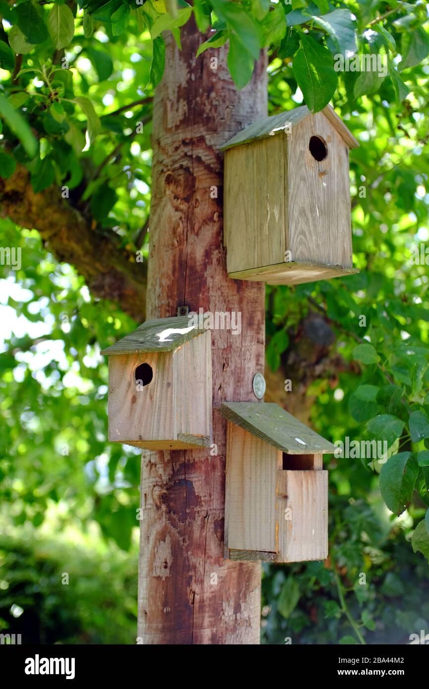 Bird boxes on a electricity pole in a garden. Stock Photo