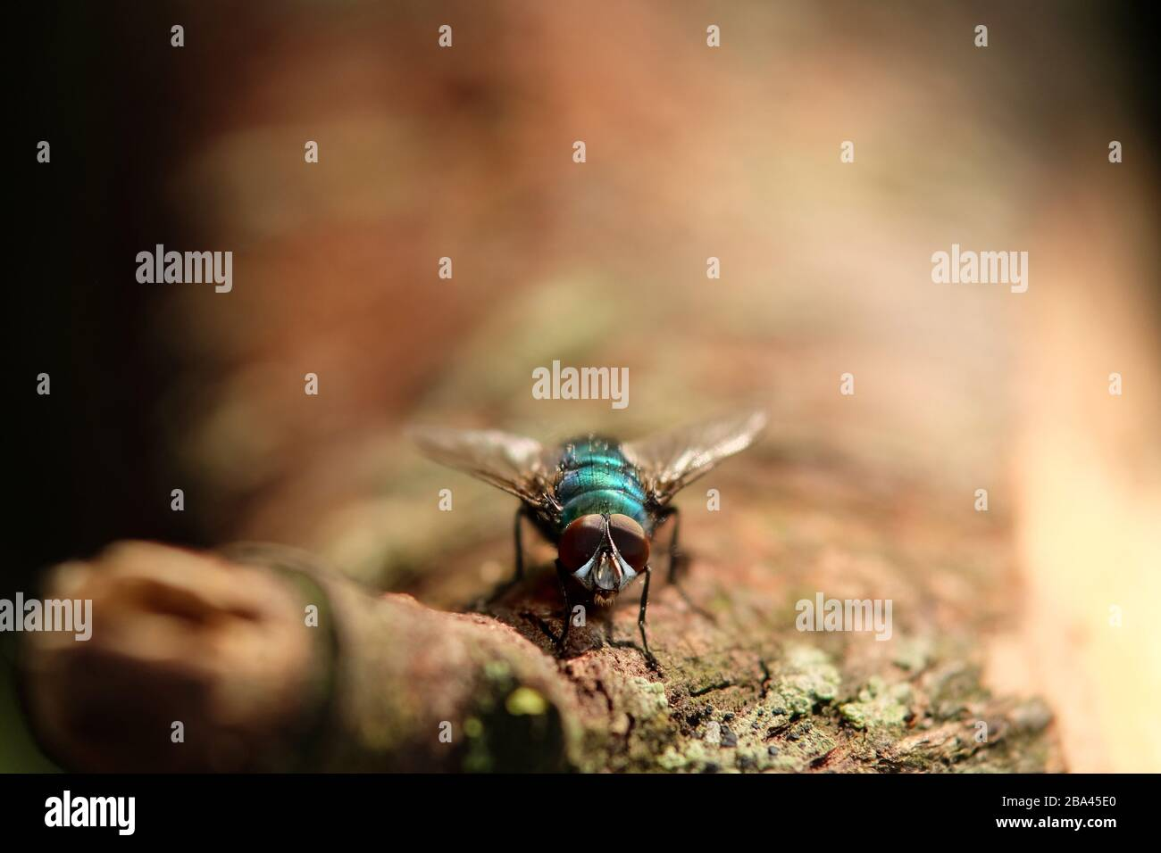 Close up of a fly sitting on a twig Stock Photo