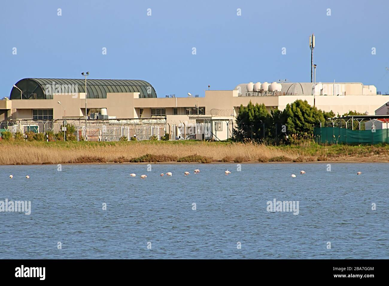Salt lake and flamingos in Larnaca, Cyprus Stock Photo