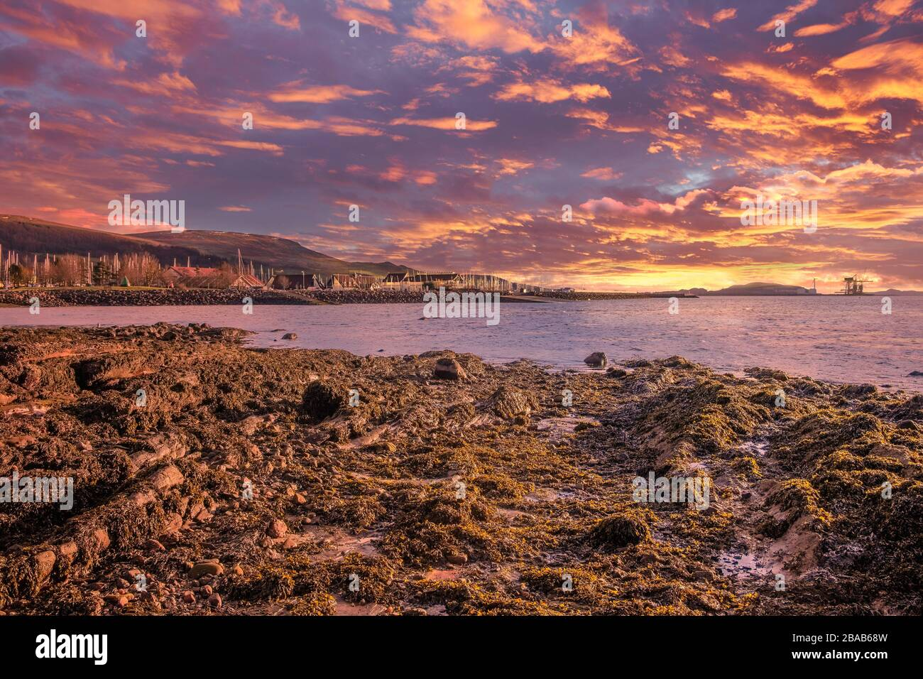 Red Tide Fish High Resolution Stock Photography And Images Alamy