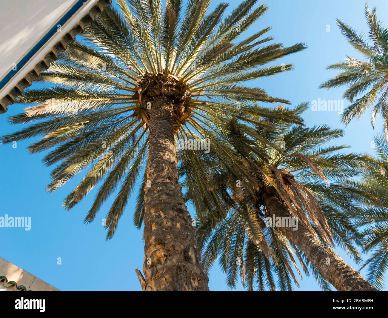 Colorful picture of a palm tree garden in Bahia Palace in Marrakech, Morocco taken in January 2020 with an angular perspective from the ground up Stock Photo