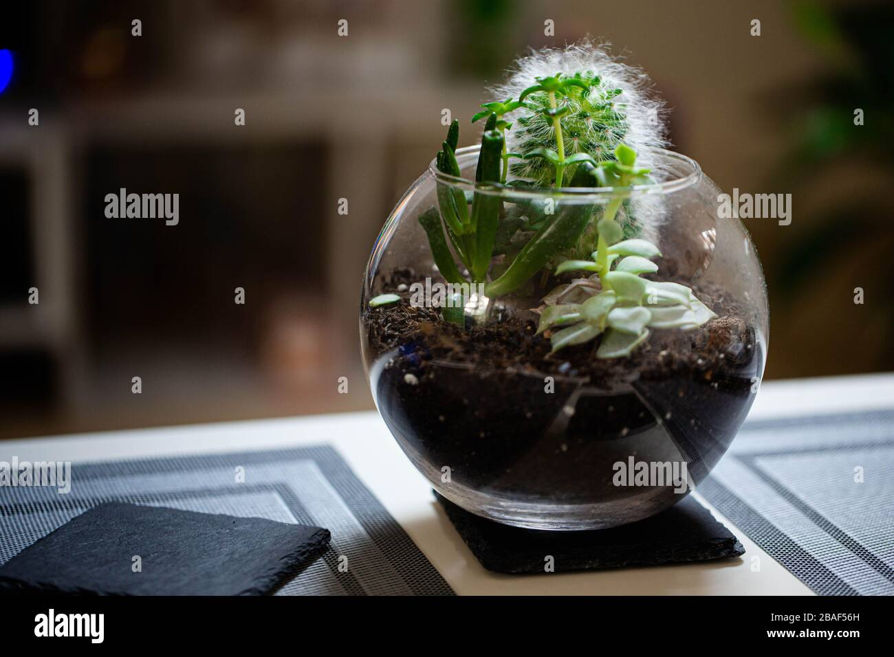 An Open Terrarium With Several Different Succulents Growing Inside Sat On A Coffee Table In A Well Lit Modern Apartment Stock Photo Alamy