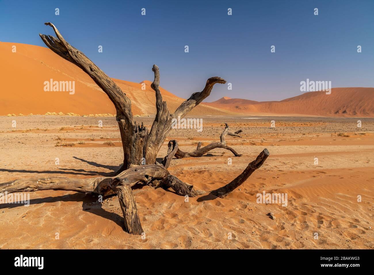 Desert landscape, Sossusvlei, Namib-Naukluft National Park, Sesriem, Namibia Stock Photo