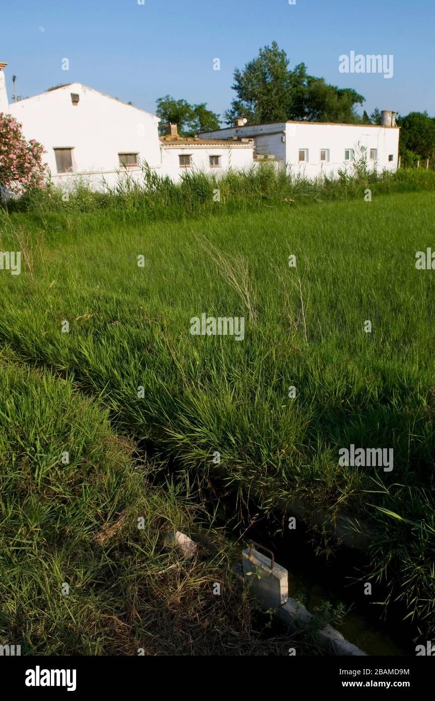 Reserva Natural Riet Vell, Delta de l'Ebre, Amposta, Montsià, Catalunya Stock Photo