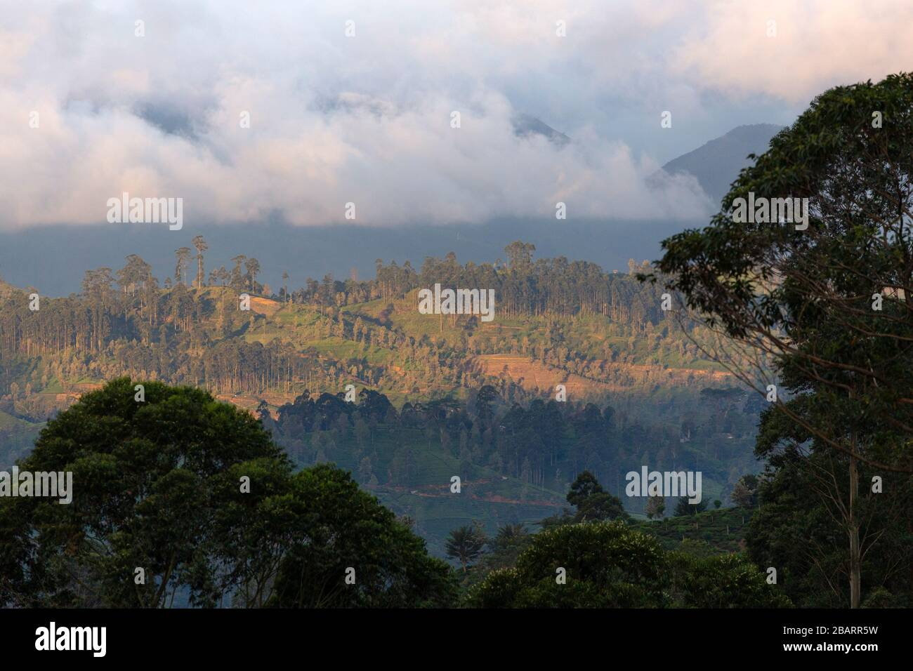 Late Afternoon Landscape View At Dalhousie In The Hill Country Of Sri Lanka Stock Photo Alamy