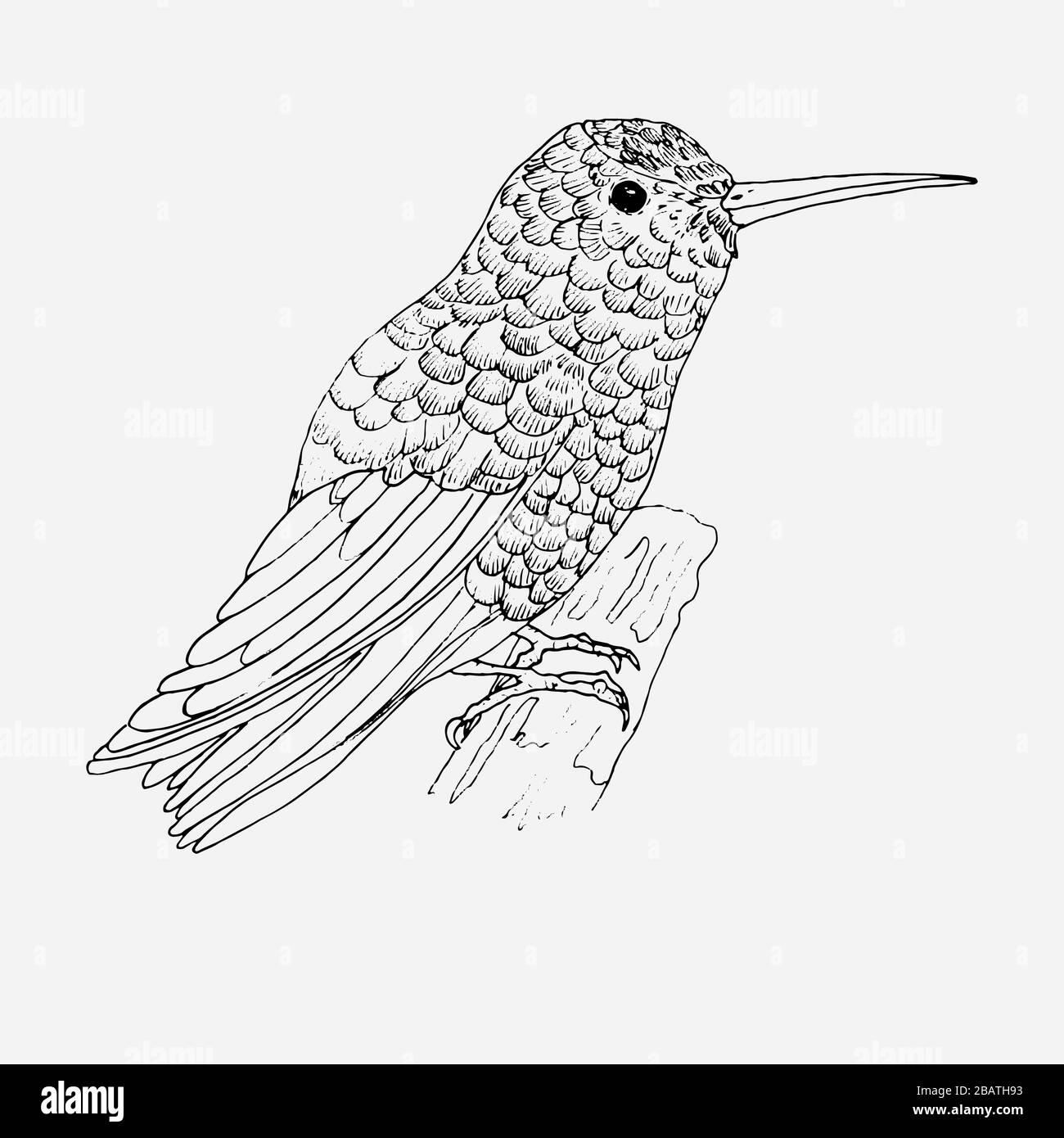 Hummingbird For Coloring Page Bird Stock Photo Alamy