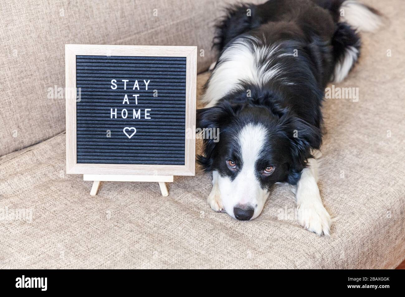 Stay Home Funny Portrait Of Cute Puppy Dog On Couch With Letter Board Inscription Stay At