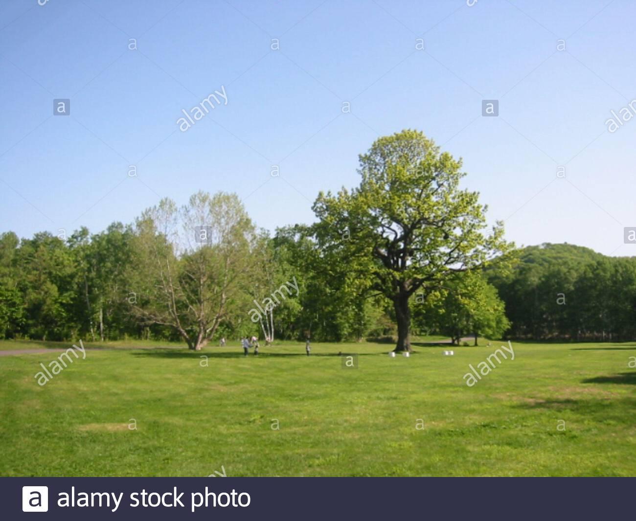 Makomanai Park High Resolution Stock Photography and Images - Alamy