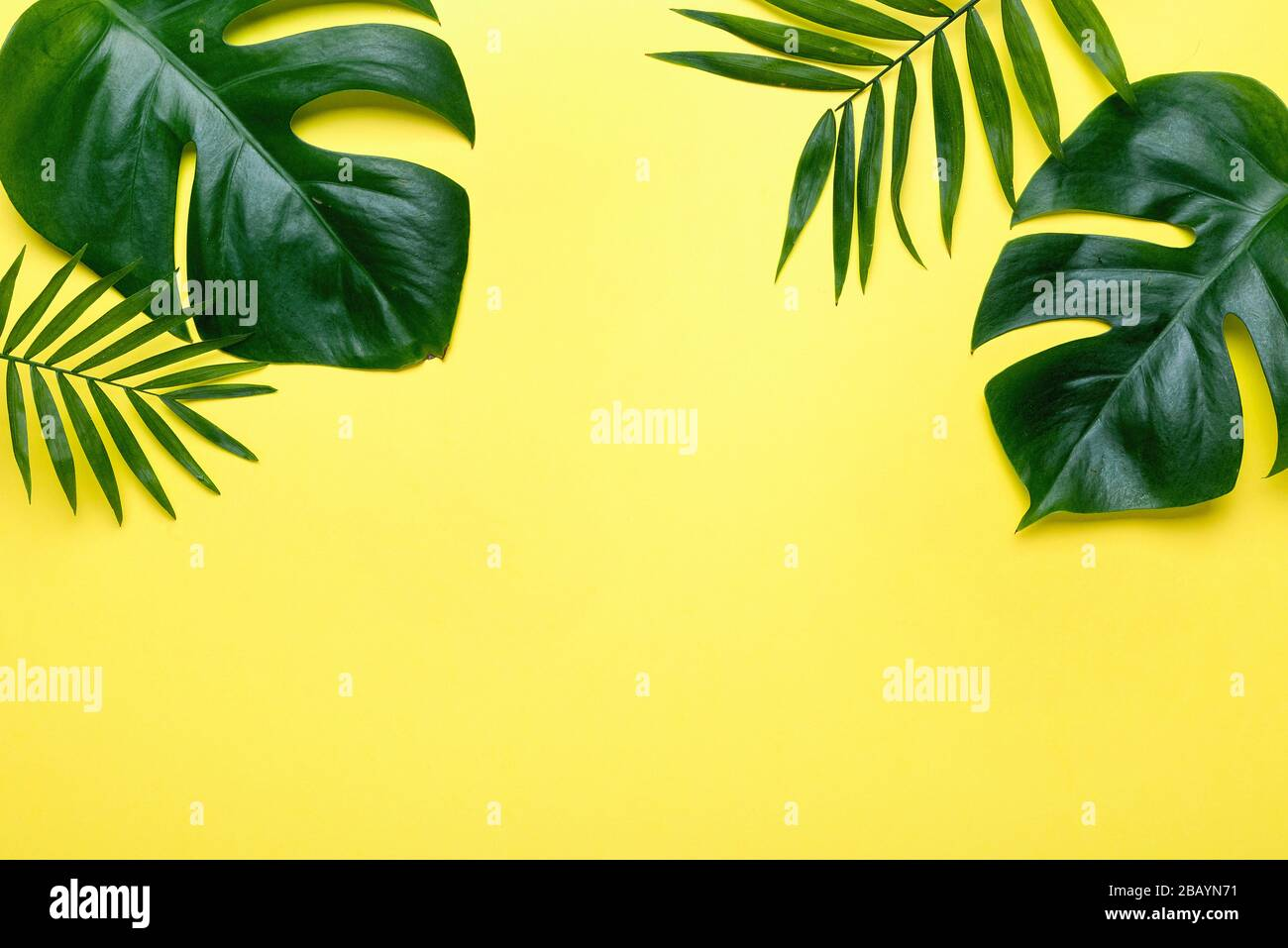 Frame Of Tropical Leaves Monstera And Palm On Yellow Background A Space For Text Top View Flat Lay Stock Photo Alamy Download a free preview or high quality adobe illustrator ai, eps, pdf and high resolution jpeg versions. https www alamy com frame of tropical leaves monstera and palm on yellow background a space for text top view flat lay image350963285 html