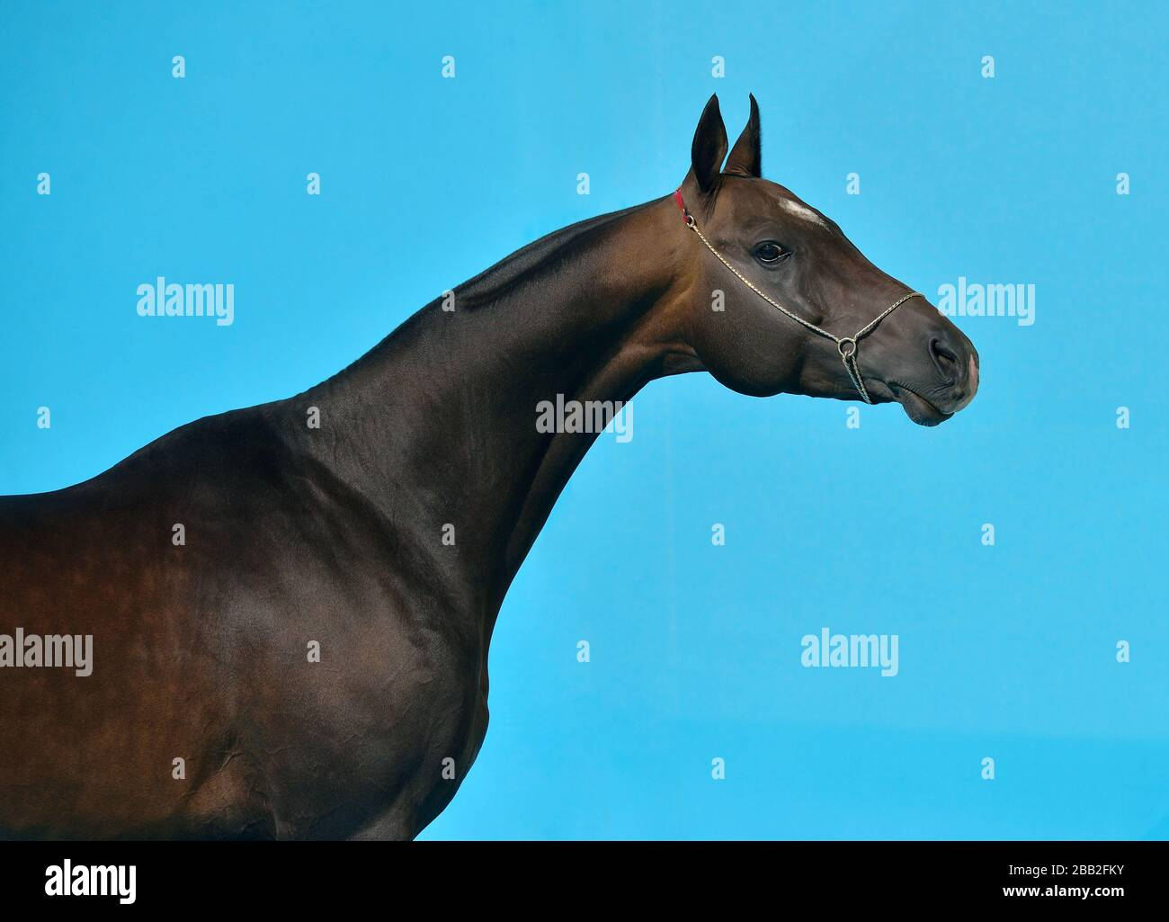 Portrait Black Stallion Against Dark High Resolution Stock Photography And Images Alamy