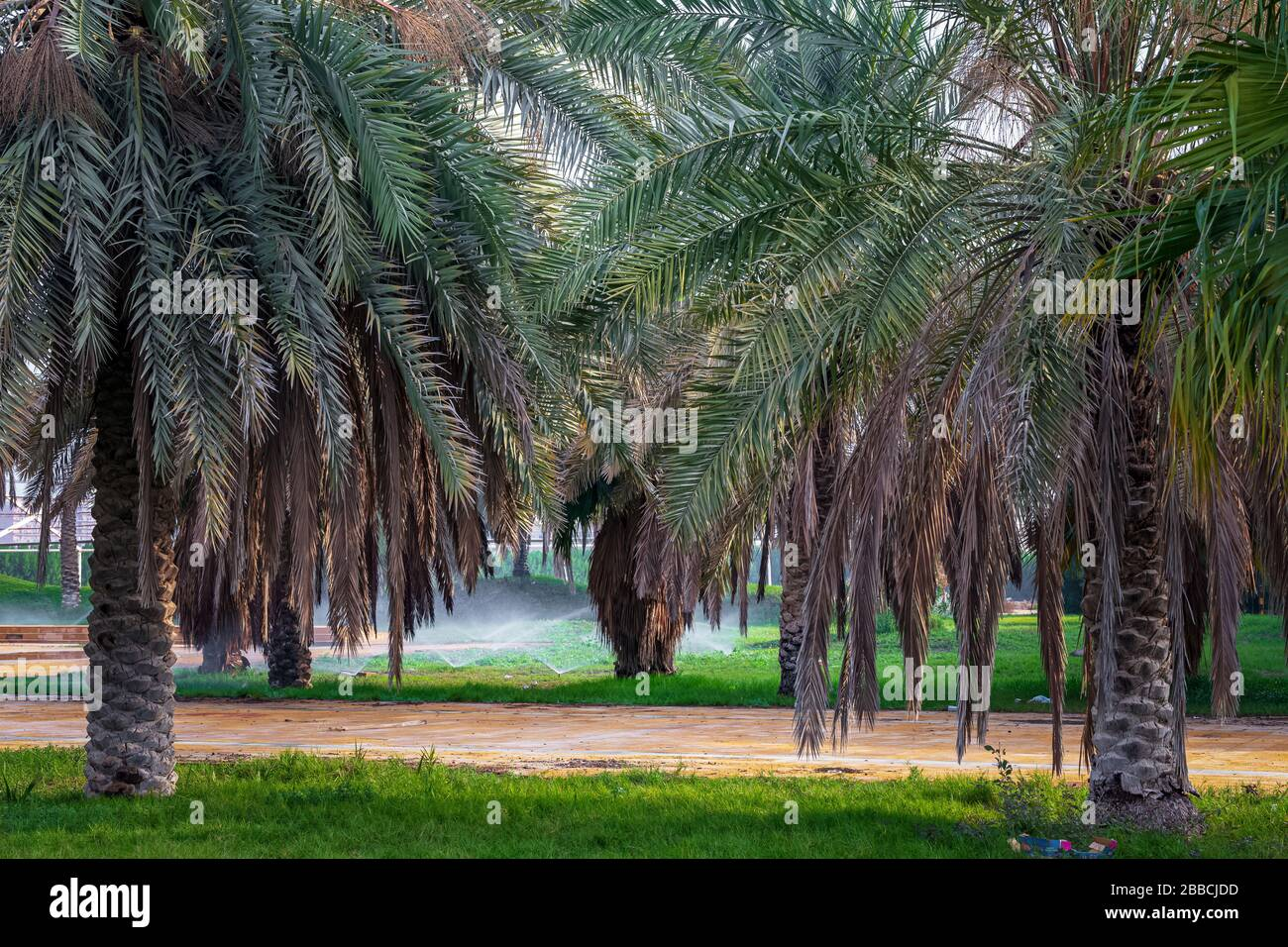 Saudi Arabia Fruit High Resolution Stock Photography And Images Alamy