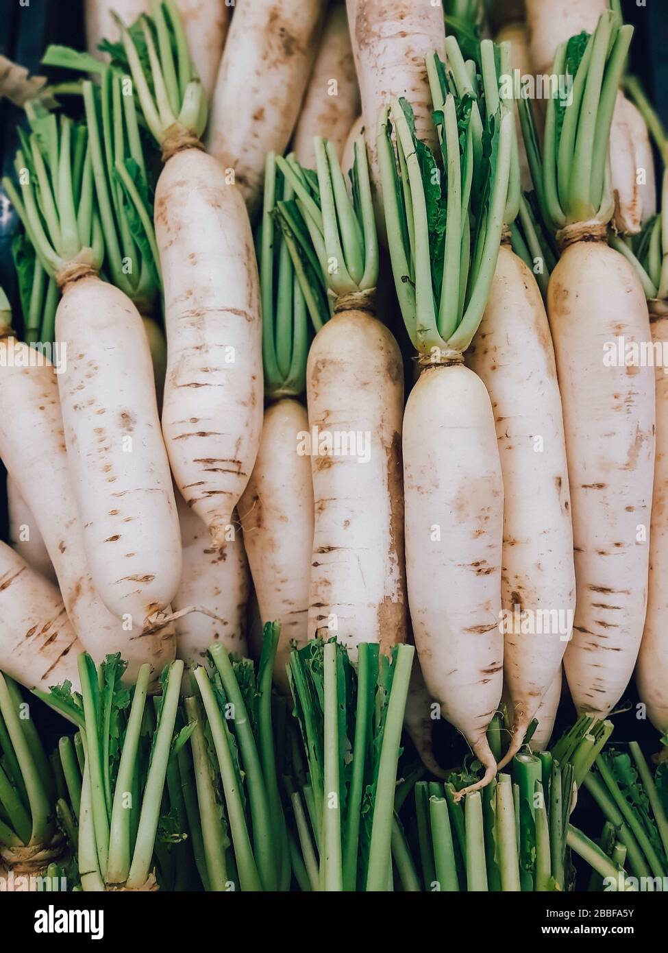 Organic local daikon radish vegetables or sell in the market, vegetable Stock Photo