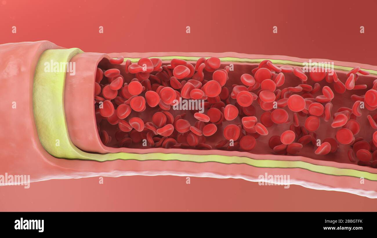 3d illustration of red blood cells inside an artery, vein. Healthy arterial cross-section blood flow. Scientific and medical microbiological concept Stock Photo