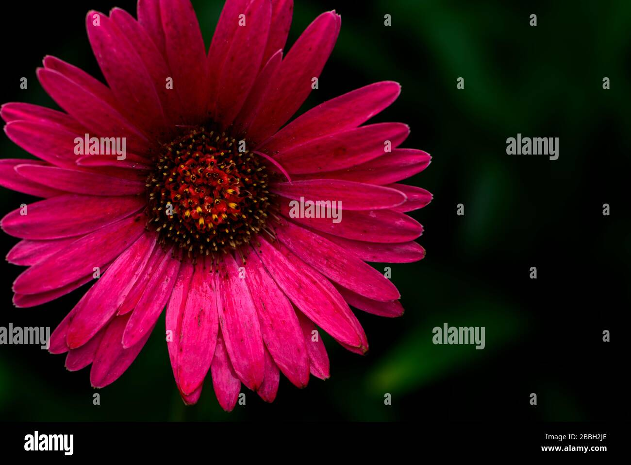 Imperfect Flower High Resolution Stock Photography And Images Alamy
