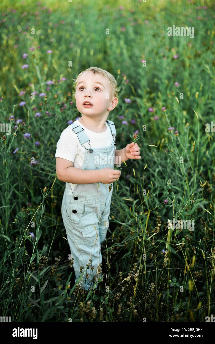 Two year old boy in baby blue coveralls picking flowers in a meadow. Stock Photo