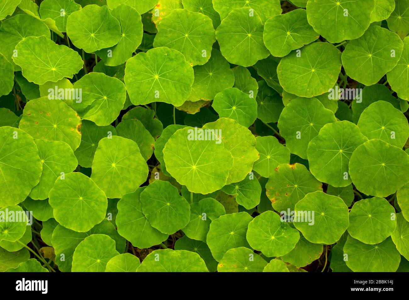 Bright Green Plants Growing In A Garden Stock Photo Alamy