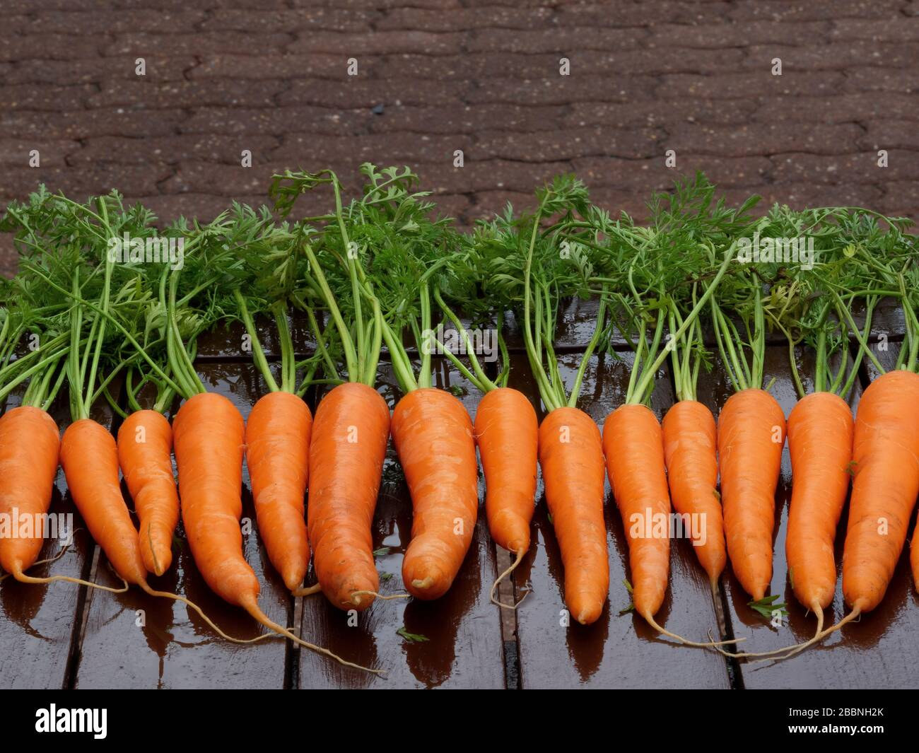 organic carrots bunch o table closeup horizontal background Stock Photo