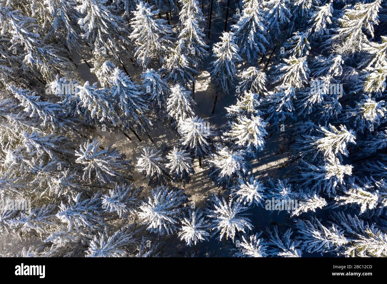 verschneite Fichten, Fichtenwald, Wald im Winter, Luftaufnahme, Dietramszell, Oberbayern, Bayern, Deutschland, Stock Photo