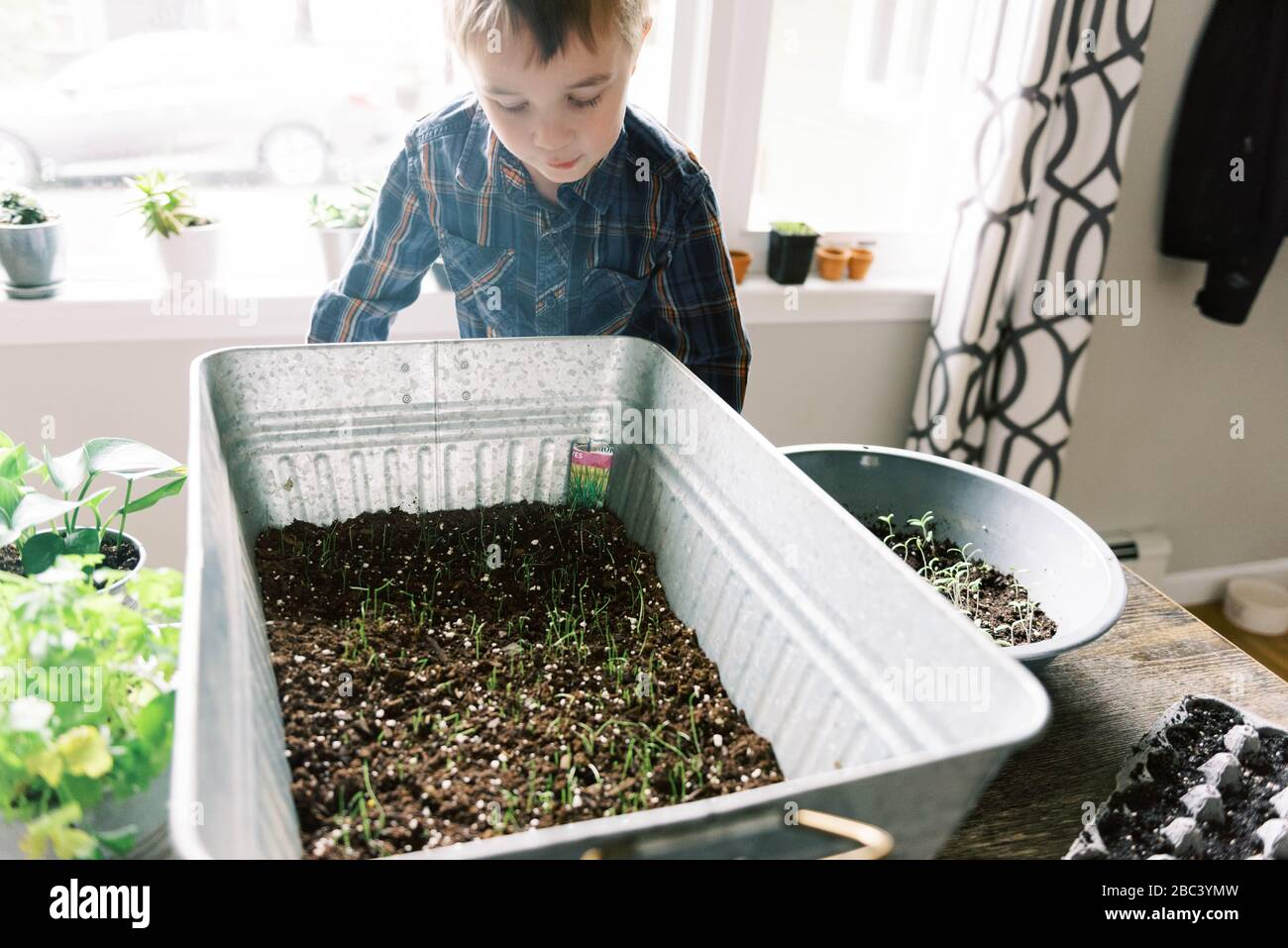 Little boy growing chives for the season. Stock Photo