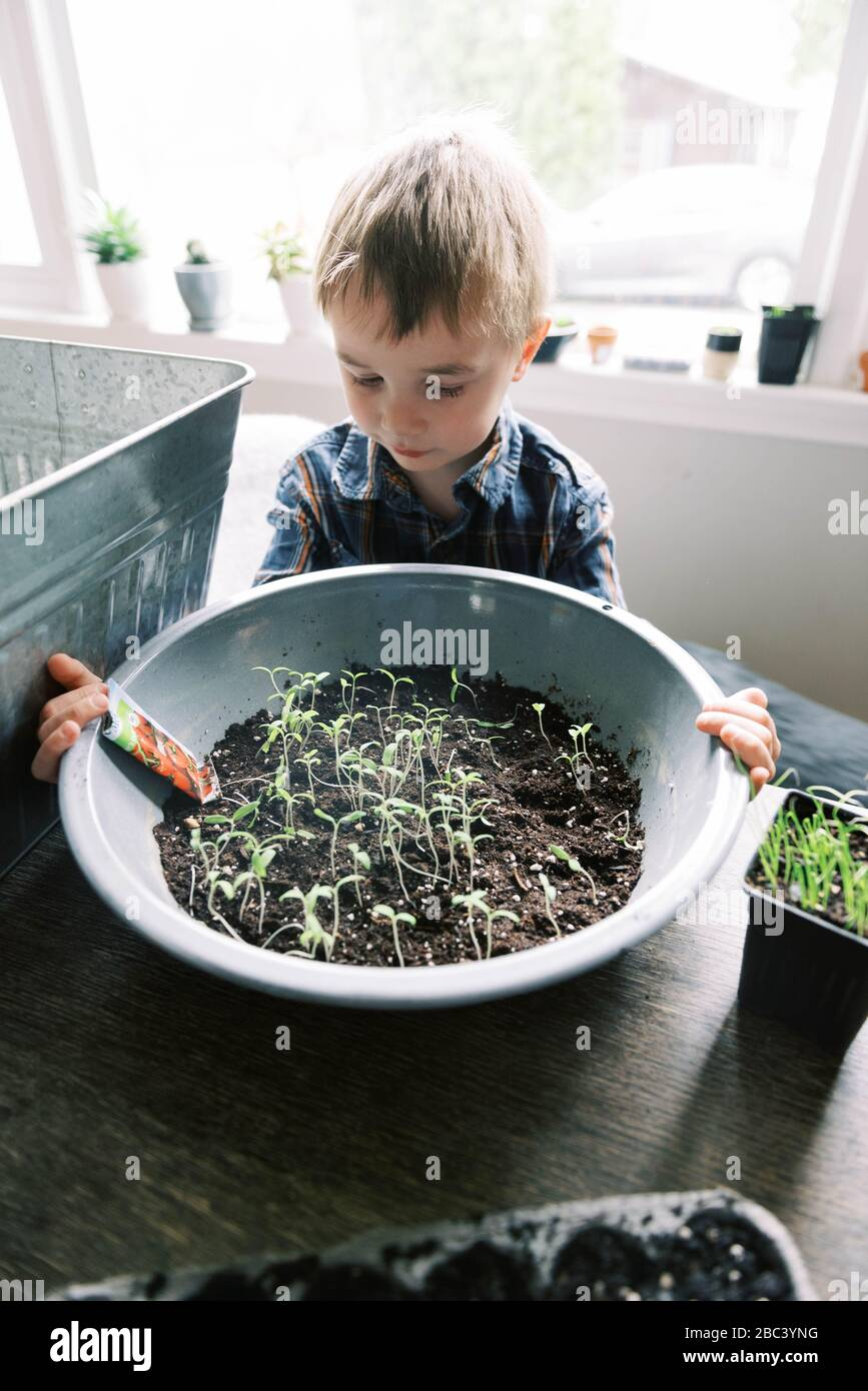 Little boy growing little cherry tomatoes for the season. Stock Photo