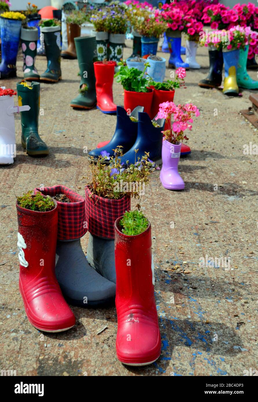 Variety of colours of welly boot planters with vaying types of flowers Stock Photo