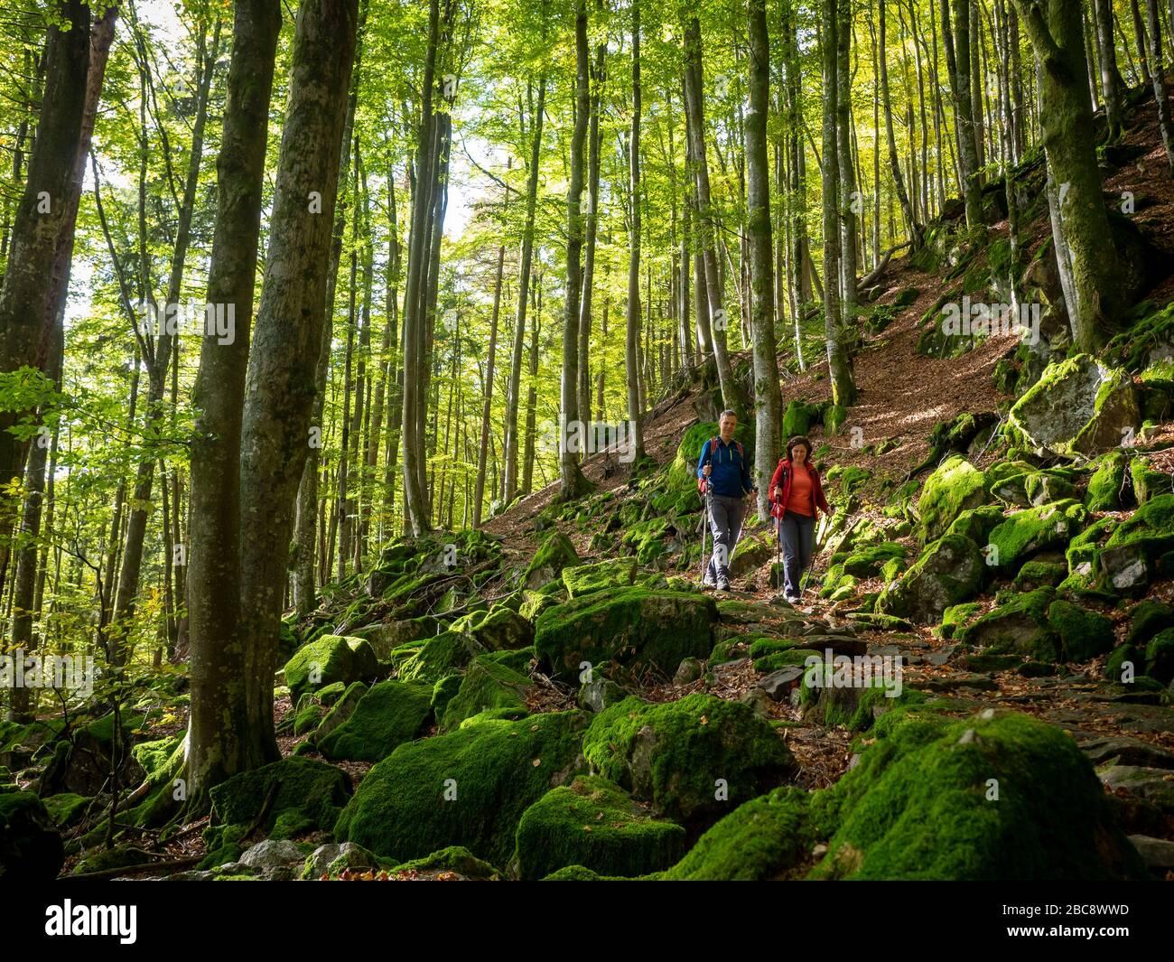 Hiking on the Zweälersteig, Bannwald Zweribach Stock Photo