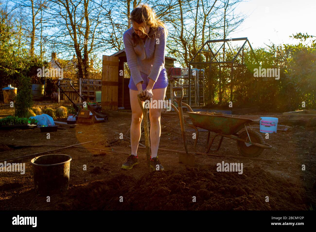 Preparing the new allotment early in the season - getting it ready for food production, keeping active during lockdown - life in the time of covid-19 Stock Photo