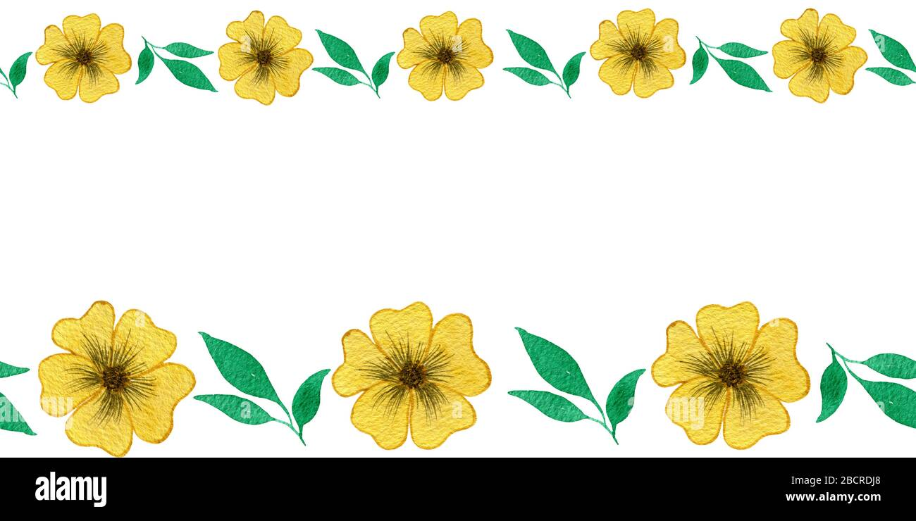 spring yellow flowers seamless border set of yellow flowers isolated on white background watercolor floral frame with copy space for text stock photo alamy alamy