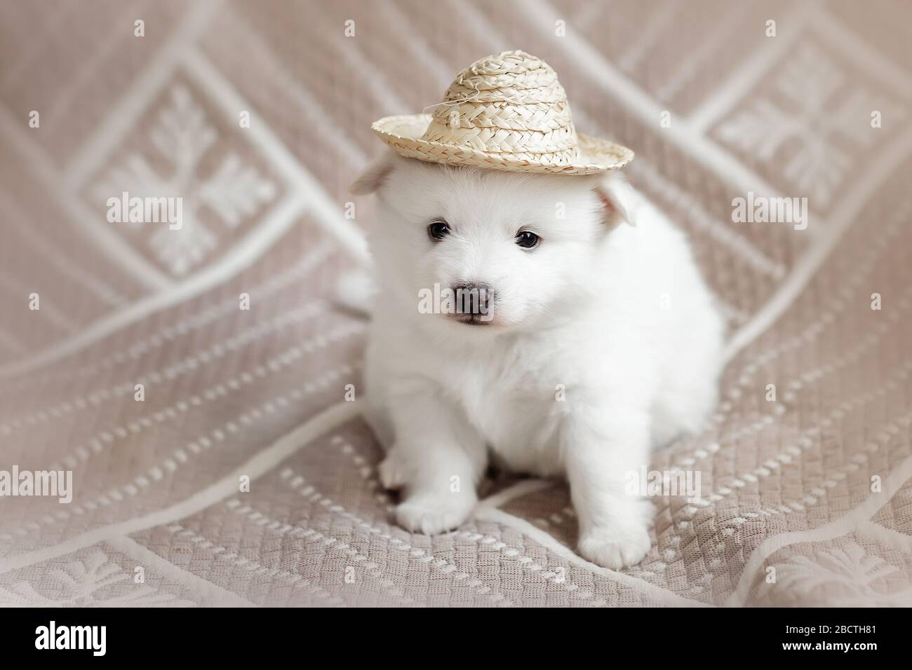 Cute Adorable Fluffy White Spitz Dog Puppy Best Pet Friend For Kids Stock Photo Alamy