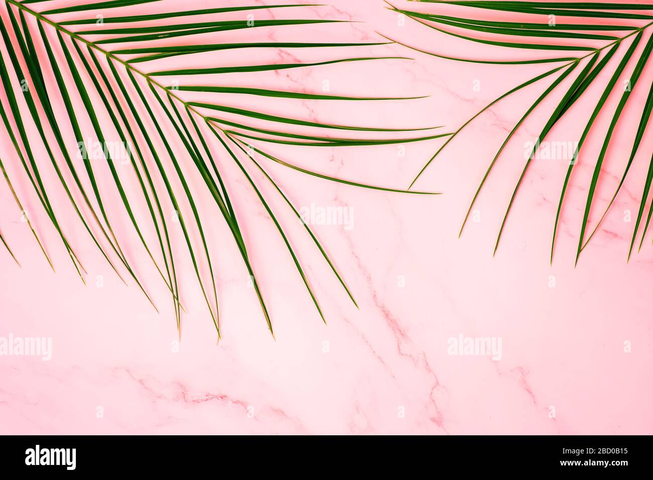 Tropical Green Palm Leaf On Pink Marble Background Flat Lay Top View Copy Space For Your Text Summer Concept Robelini Branch Stock Photo Alamy