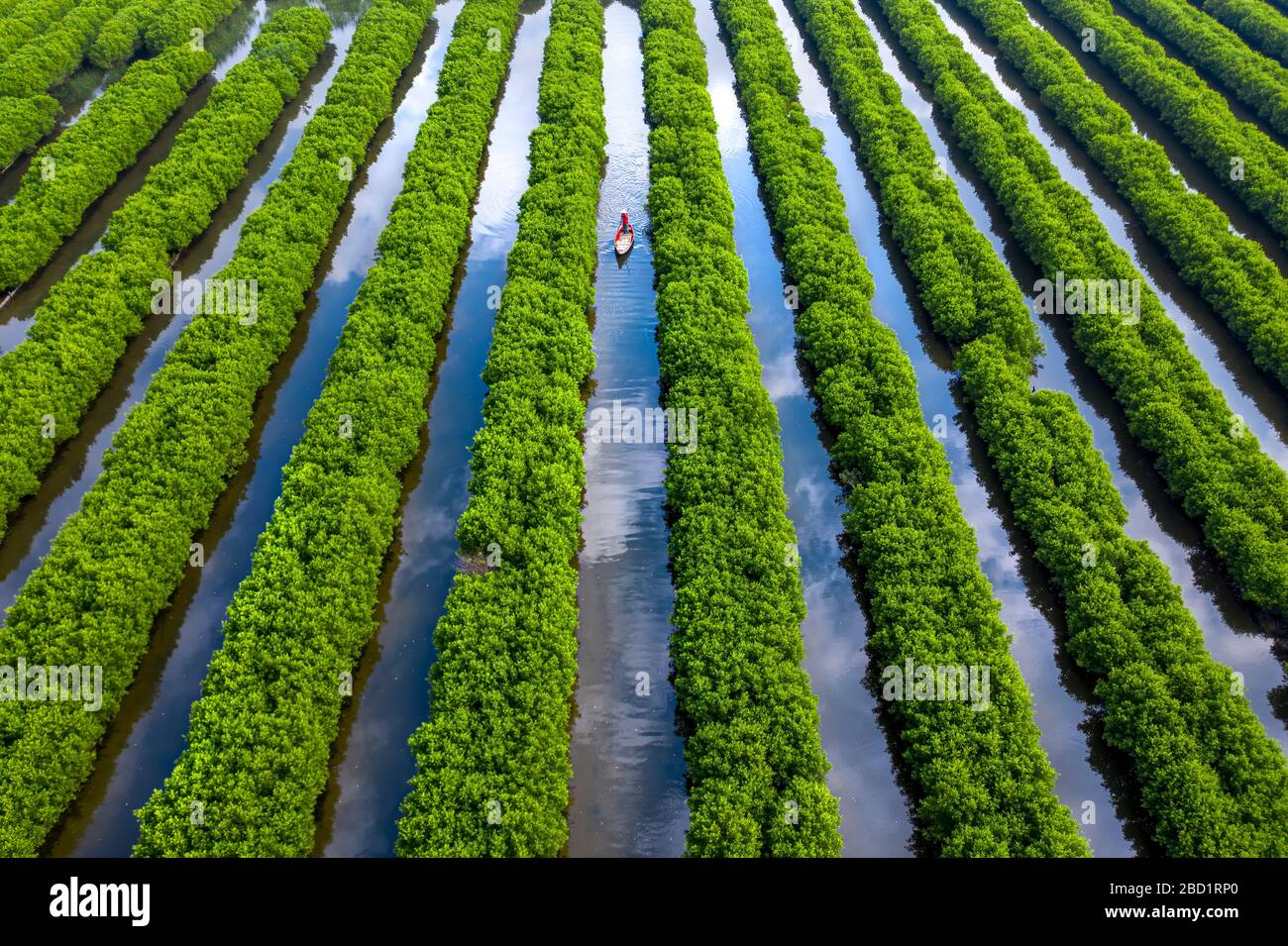 In The Middle Of Mangroves Forest Quang Ngai Vietnam Indochina Southeast Asia Asia Stock Photo Alamy