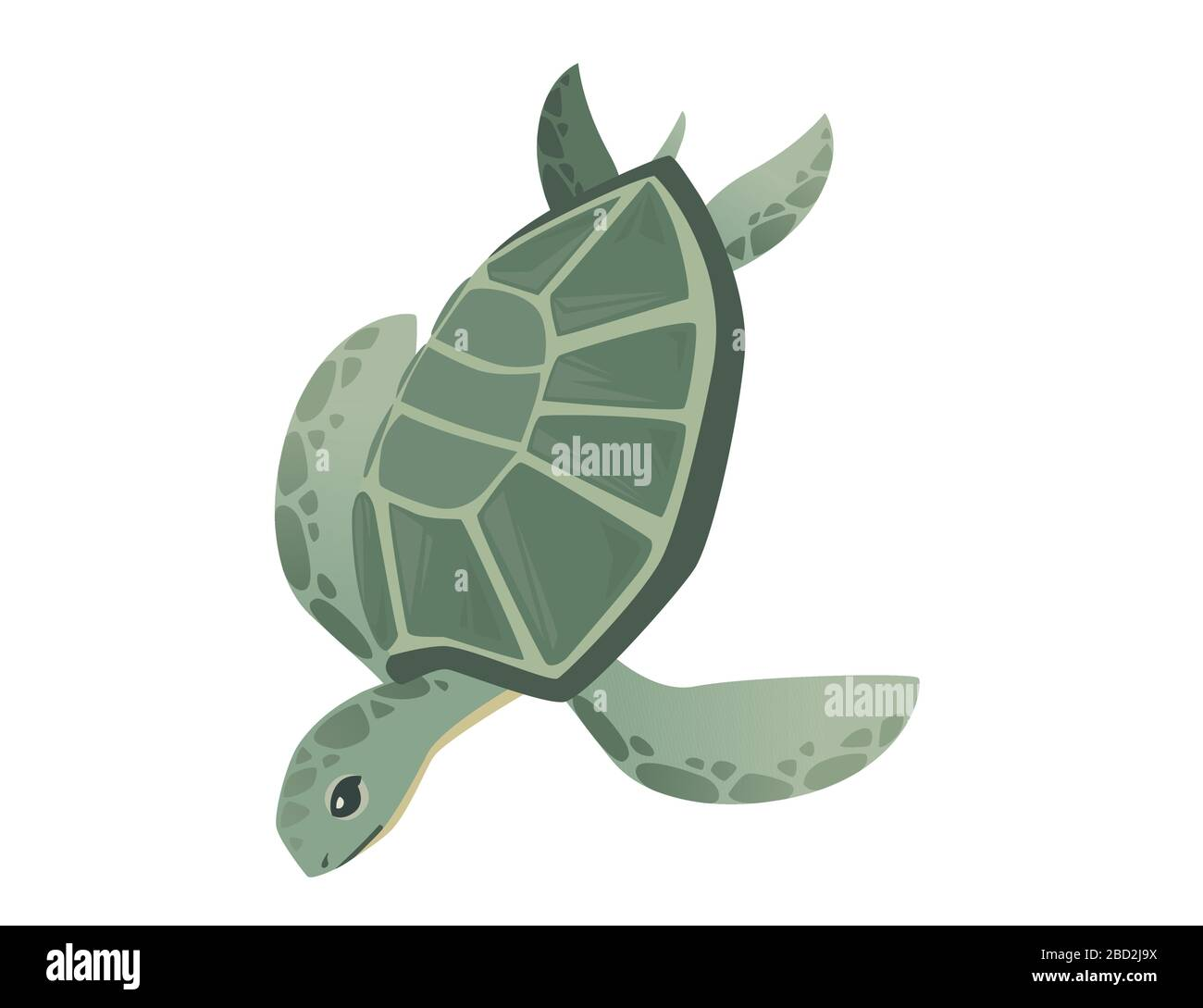 Turtle Cartoon High Resolution Stock Photography And Images Alamy