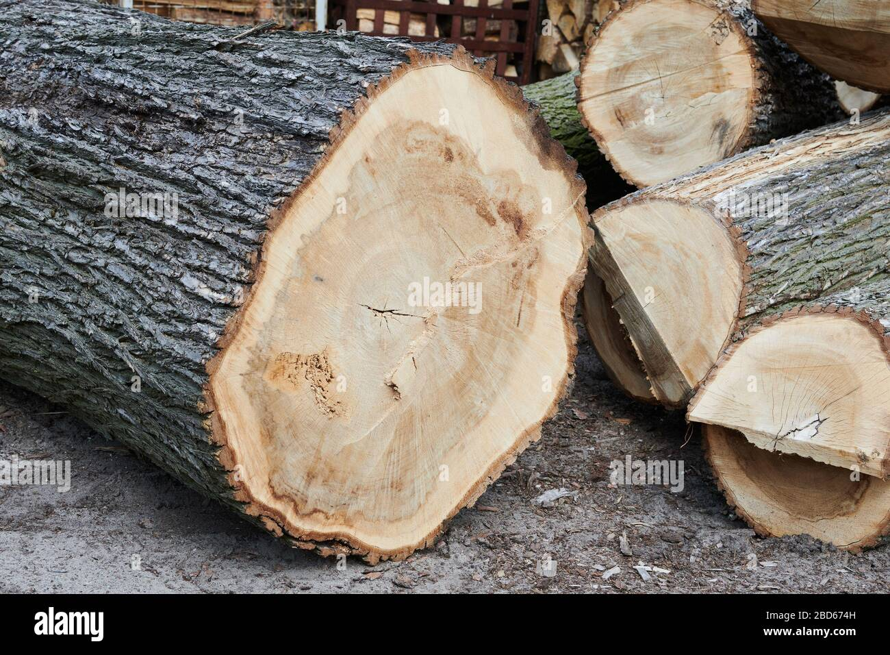 04 April 2020, Brandenburg, Märtensmühle: Sawed off diseased tree trunks lie on the premises of the company Lebens-Räume GmbH in Nuthe-Nieplitz. They are still used for decorative private orders. Photo: Annette Riedl/dpa-Zentralbild/ZB Stock Photo