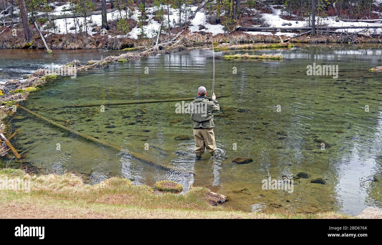 A fly fisherman casts for a rising rainbow trout on the Fall River in Central Oregon in early spring. Stock Photo