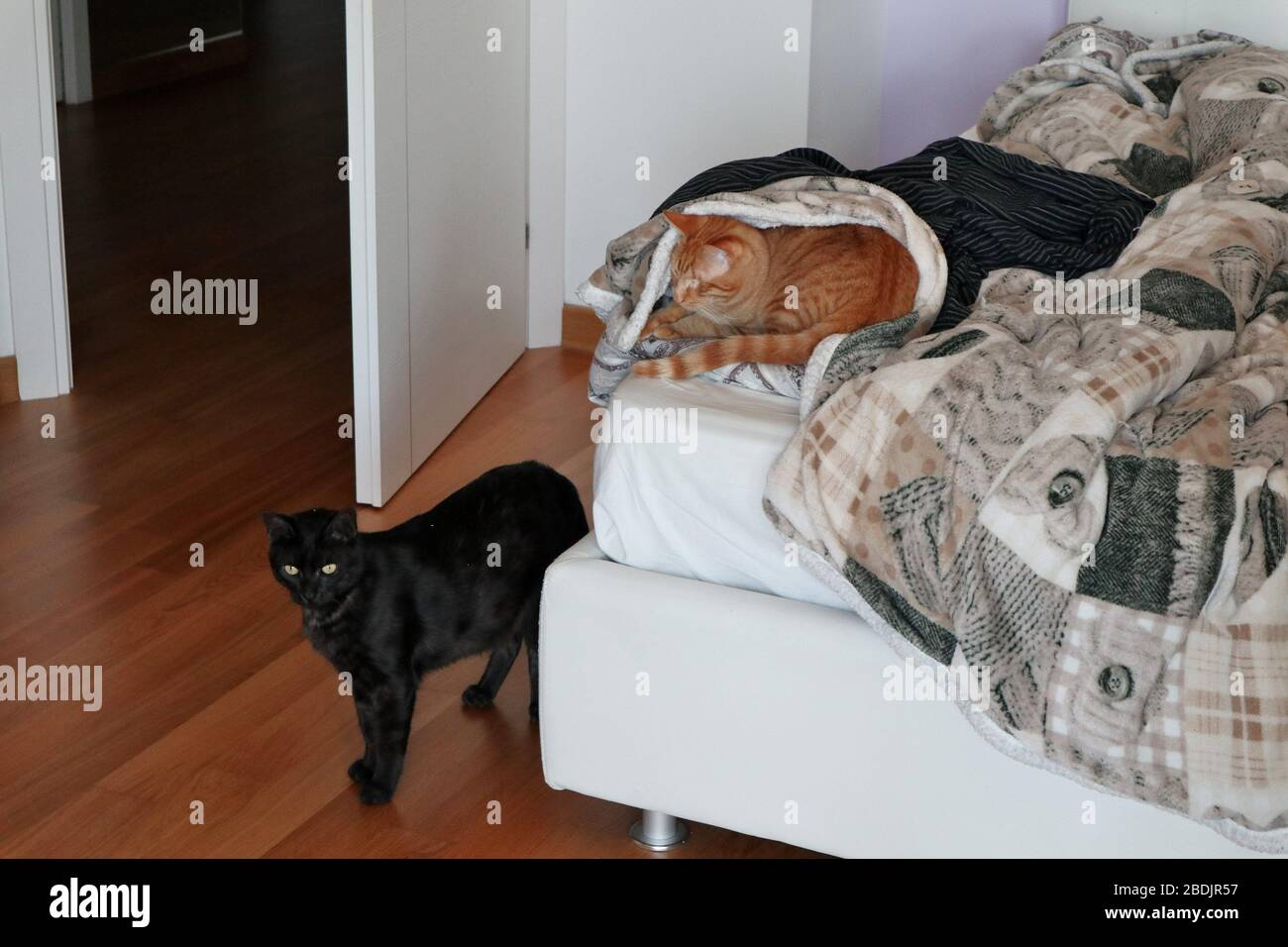 Camera Da Letto High Resolution Stock Photography And Images Alamy