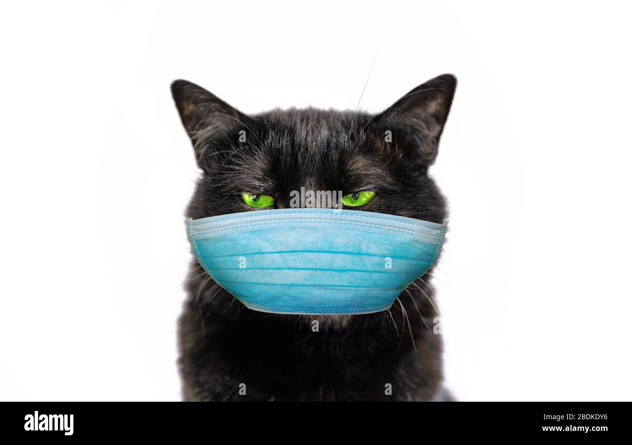 Funny Black Cat With Green Eyes And Surgical Face Mask Concept Of Cold And Flu Of Pet And Coronavirus Infections In Veterinary Covid 19 Infections Stock Photo Alamy