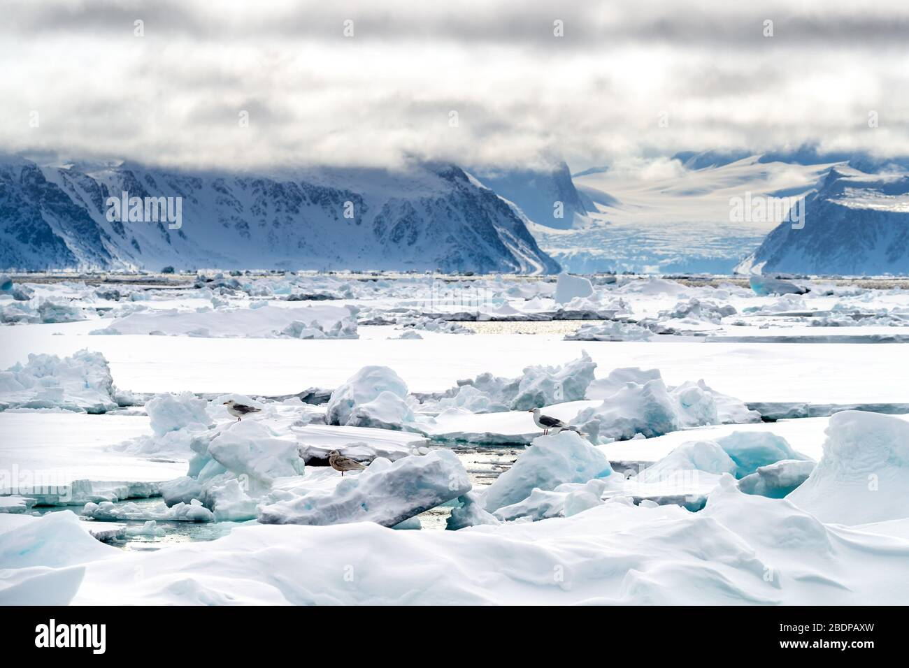Pack ice in the arctic circle at 80 degrees north, with the mountains and glaciers of Svalbard in the backgound and gulls on the ice in the foreground Stock Photo