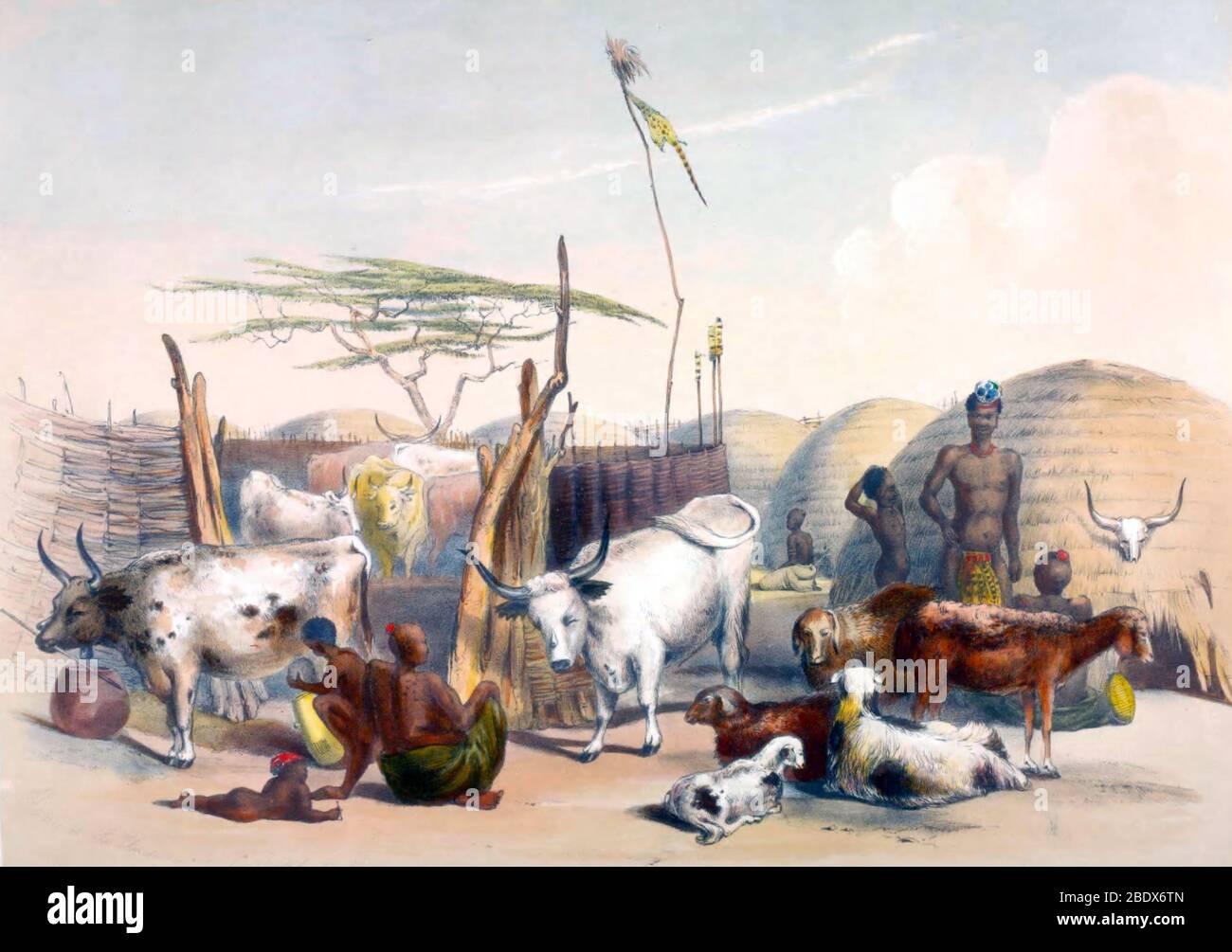 South Africa, Zulu Kraal, 1840s Stock Photo