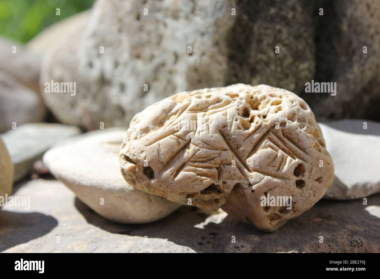 Hag Stone High Resolution Stock Photography And Images Alamy Hag stone holey stone hagstone. https www alamy com hag stone with markings image352875282 html