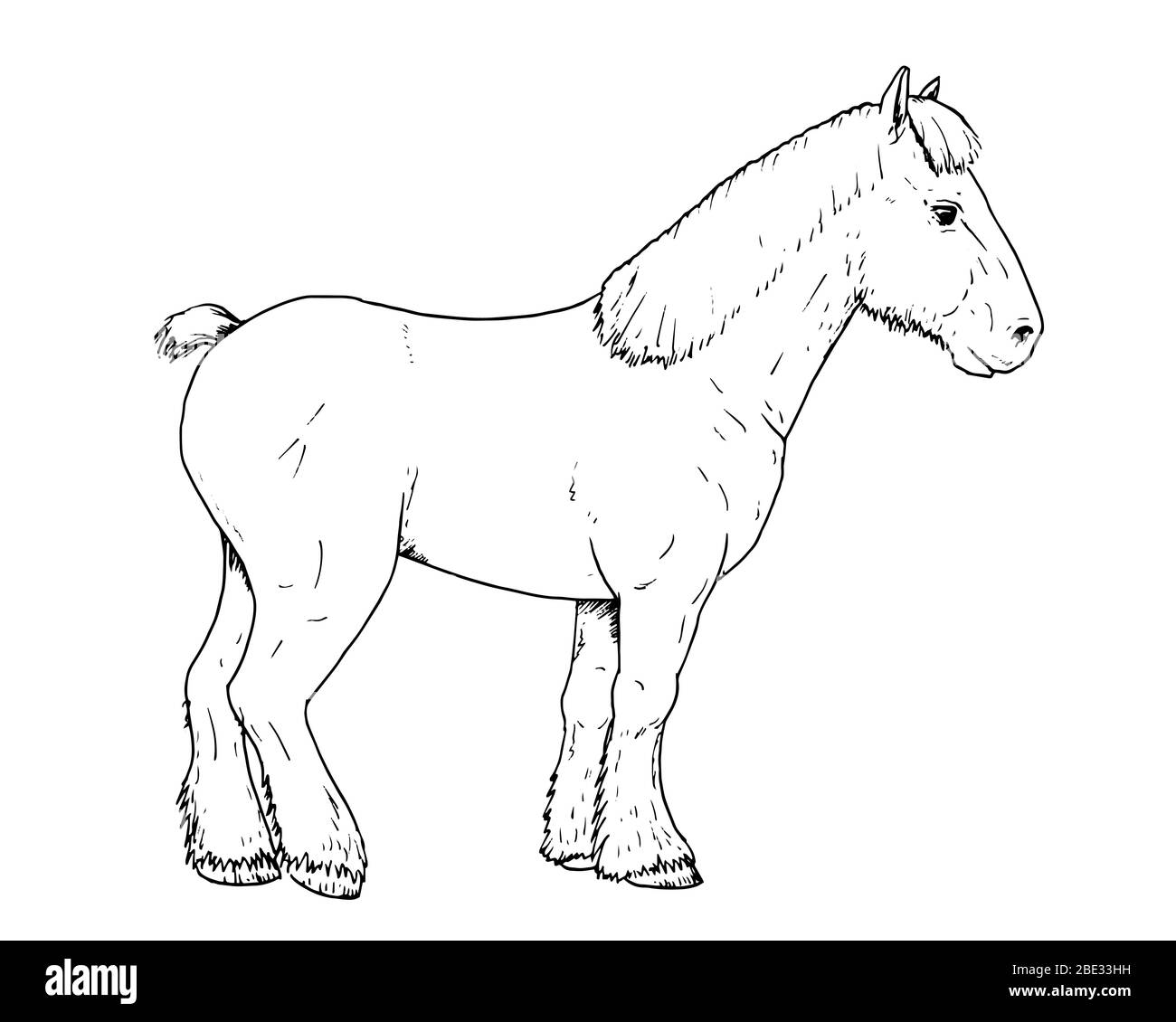 Drawing Of Dutch Draft Horse Hand Sketch Of Farm Animal Black And White Illustration Stock Vector Image Art Alamy