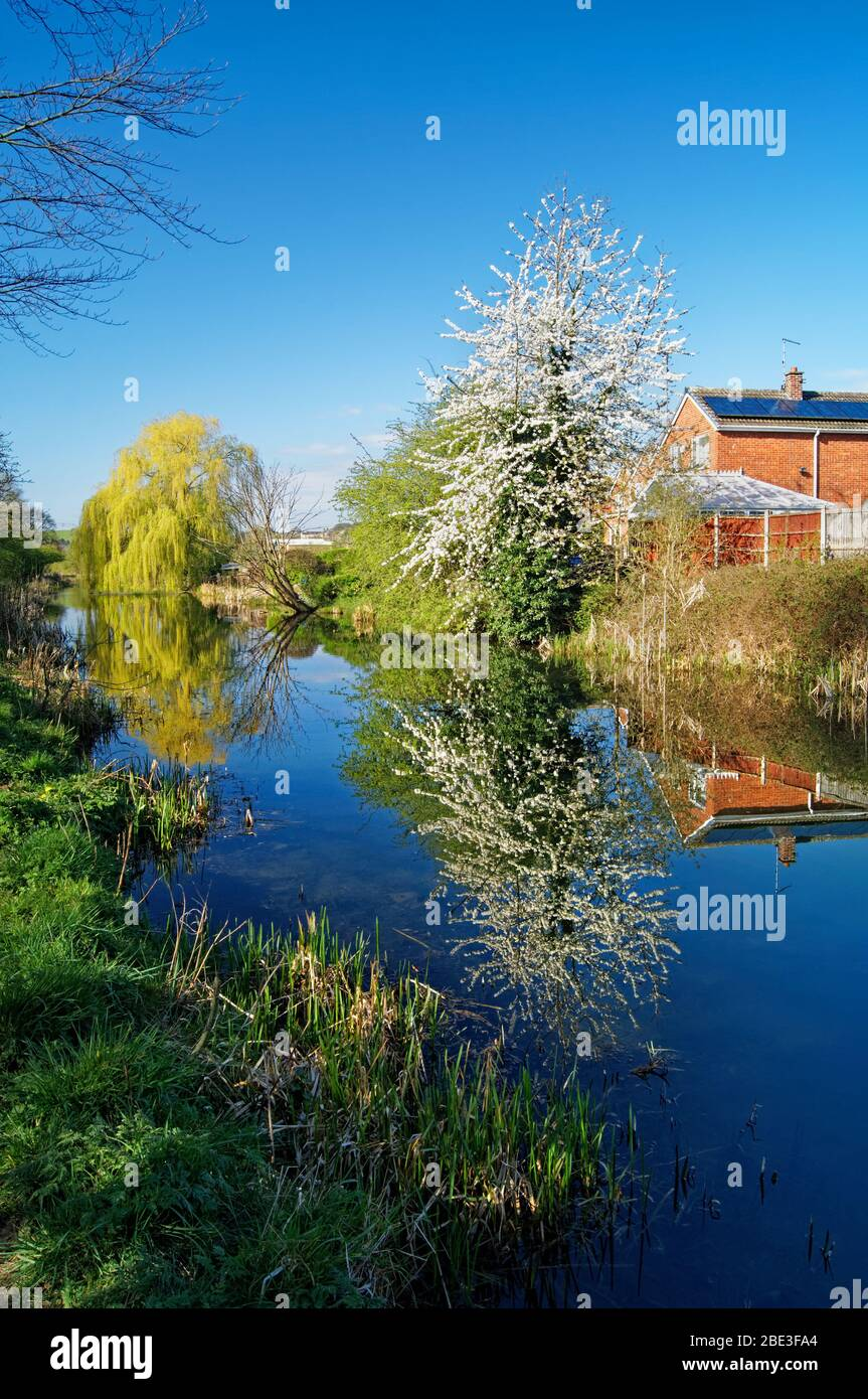 UK,South Yorkshire,Barnsley,Elsecar Canal and Footpath with Blossom in full bloom Stock Photo