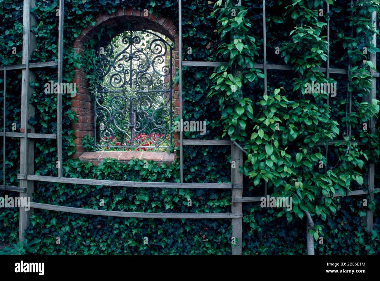 Trellis Covered With Ivy High Resolution Stock Photography and ...
