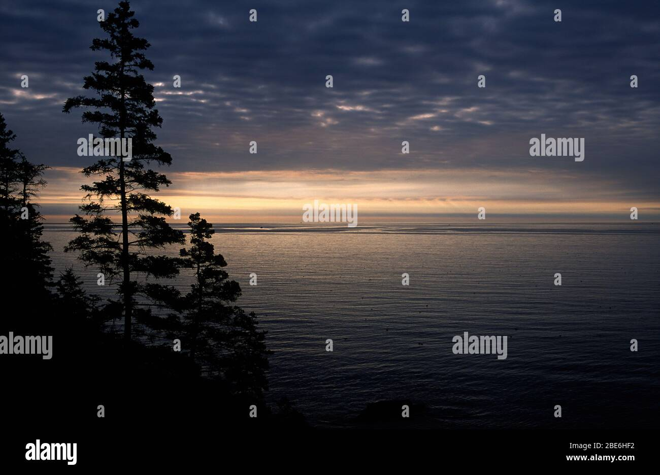 Forest shoreline silhouette, Acadia National Park, Maine Stock Photo