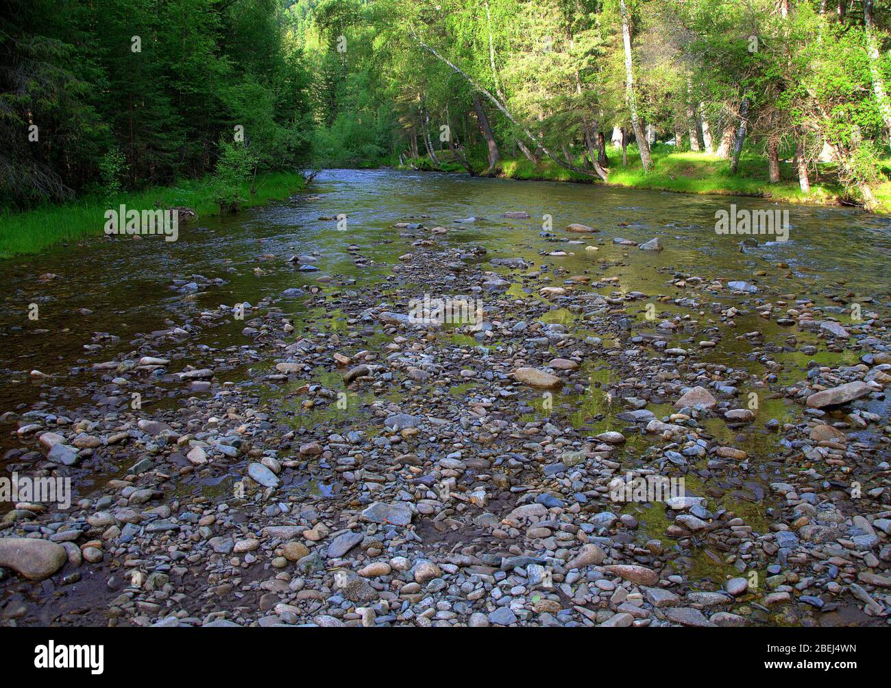 A shallow rocky river flowing serenely through the forest. Sema River, Altai, Siberia, Russia. Stock Photo