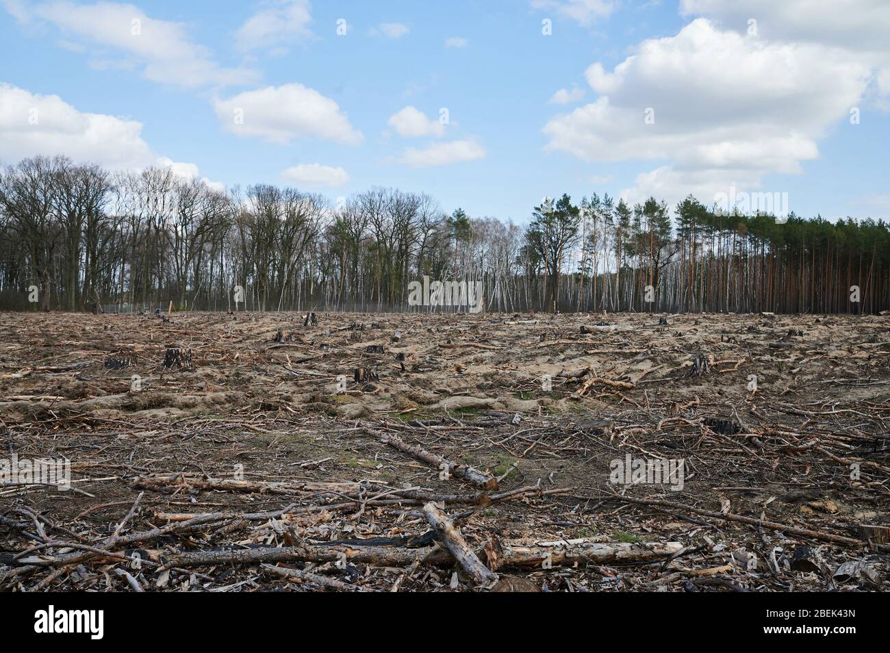 04 April 2020, Brandenburg, Märtensmühle: Burnt and charred branches and trunks lie on the forest floor. Between Hennickendorf and Märtensmühle in the district Nuthe Nieplitz, the forest fire raged in 2019. In the meantime, reforestation is being done step by step. Photo: Annette Riedl/dpa-Zentralbild/ZB Stock Photo